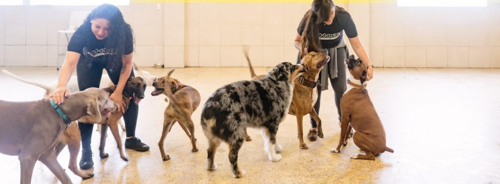 Group of dogs with staff members