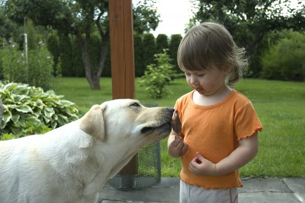 Little girl sharing her corndog with a dog