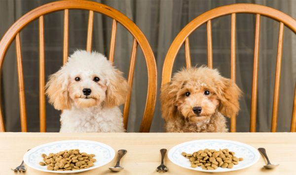 Two dogs sitting at a dinner table