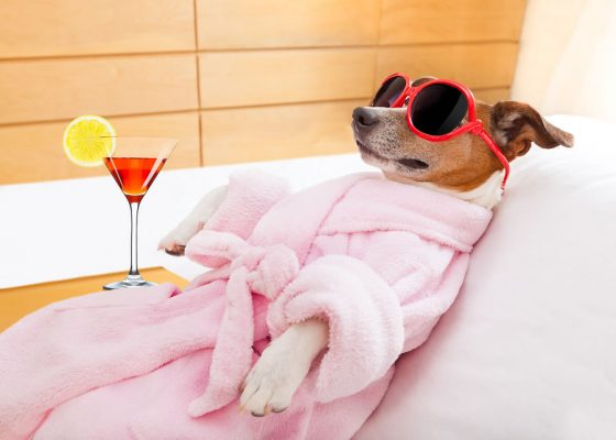Dog in sunglasses and a pink robe at the spa