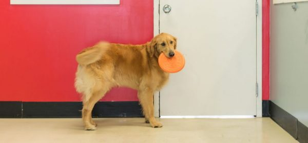 Dog holding a frisbee
