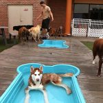 Dogs playing in a wading pool