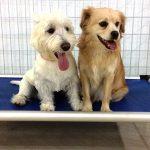 Dogs in a boarding room