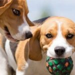 Dogs playing with a ball