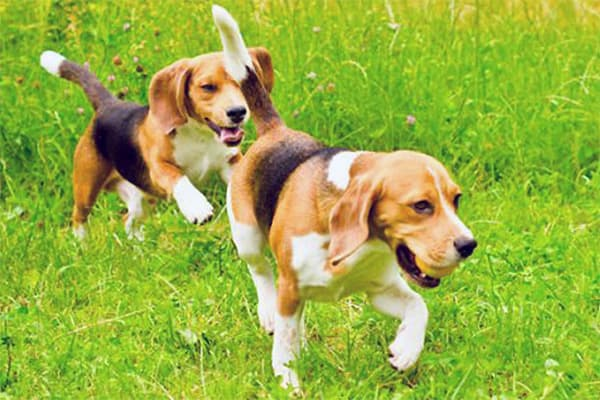 Dogs running in a field
