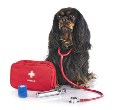 cavalier king charles and first aid